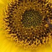 Working Honey Bee Poster