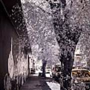 Wynwood Treet Shadow Poster