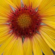 Wyoming Sunflower Poster