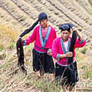 Yao Ethnic Minority Women On Rice Terrace Poster