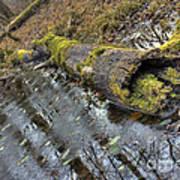 Ye Olde Mossy Log Poster