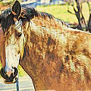 Yeller Horse Poster