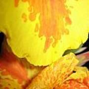 Yellow And Orange Petals Illuminated Poster