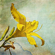 Yellow Asiatic Lilly Iv Poster