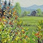 Yellow Broom Spring Poster