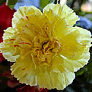 Yellow Carnation Delight Poster