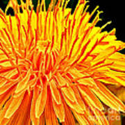 Yellow Chrysanthemum Painting Poster