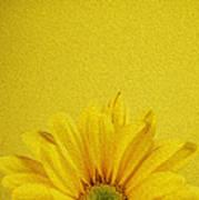 Yellow Chrysanthemum Poster