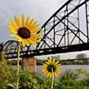 Yellow Cone Flowers And Bridge Poster