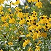 Yellow Cone Flowers Poster