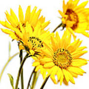 Yellow Country Wildflowers Poster