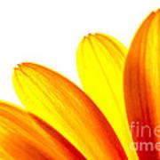 Yellow Daisy Petals Macro Poster