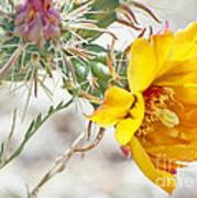 Yellow Desert Flower Poster