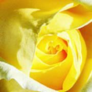 Yellow Diamond Rose Palm Springs Poster