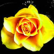 Yellow Flower On A Dark Background Poster
