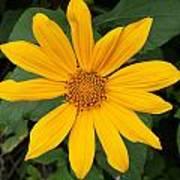Yellow Flower Petals Poster