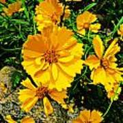 Yellow Flowers Cape Cod Poster
