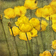 Yellow Flowers With Texture Poster