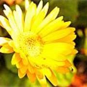 Yellow Gebera Poster