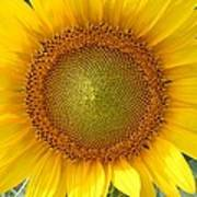 Yellow Glory #1 Poster