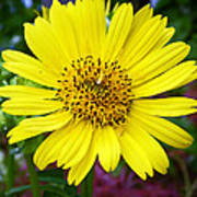 Yellow Glory Poster
