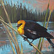 Yellow Headed Black Bird Poster