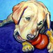 Yellow Lab With Kong Poster