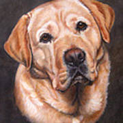 Yellow Labrador Portrait - Dark Yellow Dog Poster