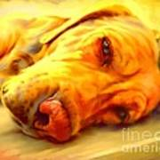 Yellow Labrador Portrait Poster