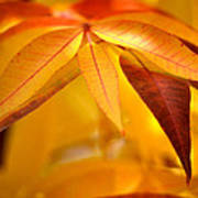 Yellow Leaves At Dawn Poster