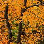 Yellow Leaves Poster