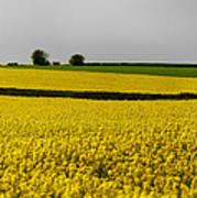 Yellow Mellow  Poster