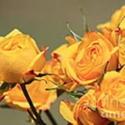 Yellow Mini Rose's Closeup Poster