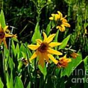 Yellow Mountain Flowers Poster