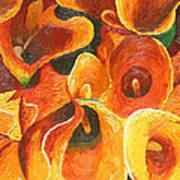 Yellow-orange Calla Lilies Poster