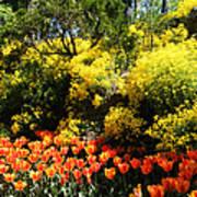 Yellow Orange - Springtime Poster