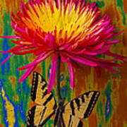 Yellow Red Mum With Yellow Black Butterfly Poster