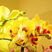Yellow Red Orchid Flowers Art Prints Orchids Poster