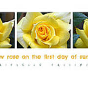 Yellow Rose On The First Day Of Summer Poster