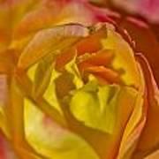 Yellow Rose Up Close Poster