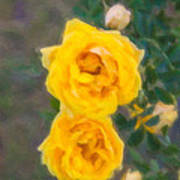 Yellow Roses On A Bush Poster