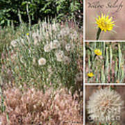 Yellow Salsify Collage Poster
