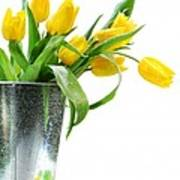 Yellow Spring Tulips Poster by Sandra Cunningham