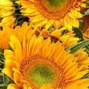 Yellow Sun Flower Burst Poster