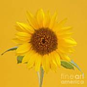 Yellow Sunflower On Yellow Poster
