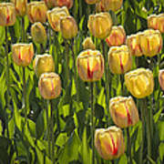 Yellow Tulip Flowers On Windmill Island In Holland Michigan Poster