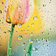 Yellow Tulip Reflecting In Water Drops Poster