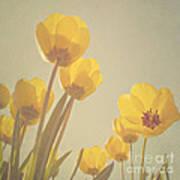 Yellow Tulips Poster by Diana Kraleva