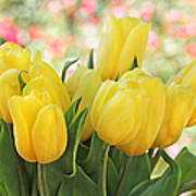 Yellow Tulips In The Spring Garden Poster