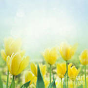 Yellow Tulips Poster